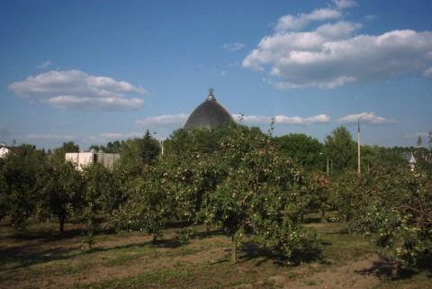 """яблони и павильон """"Космос"""""""