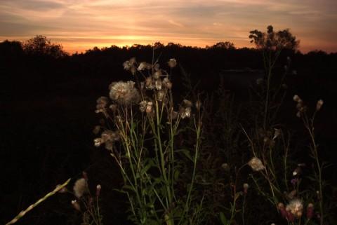 травы и закат