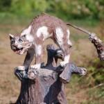 Статуя кота в парке, Мытищи