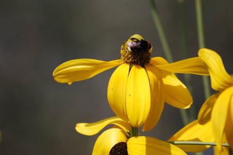насекомое и цветок