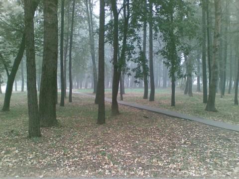 смог в парке