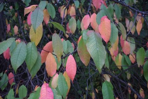 листья в красном и зеленом
