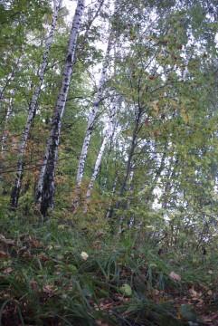 фотография подмосковного леса