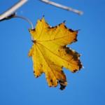 Желтый лист осенний