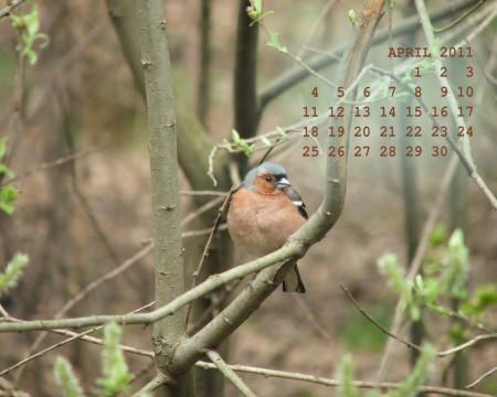 обои на апрель 2011 - птица в лесу возле Кусково