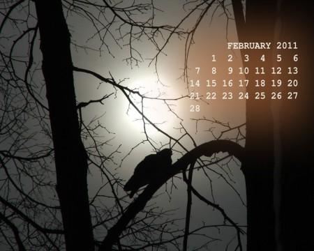 обои-календарь с фото птицы на февраль 2011 года