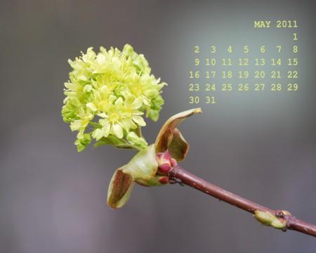 Фотокалендарь на рабочий стол на май