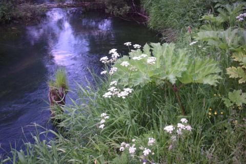 травы над речкой в Подмосковье