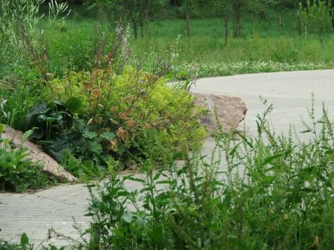 зеленые клумбы, трава и серые дорожки