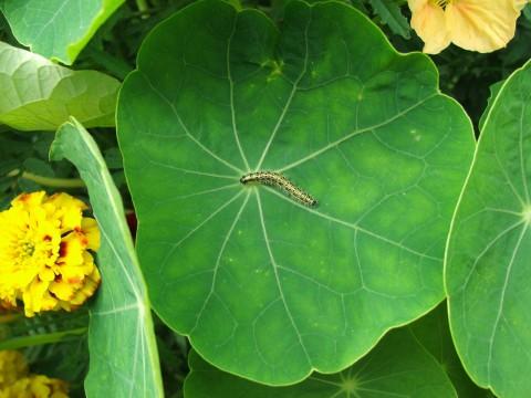 гусеница на большом зеленом листе