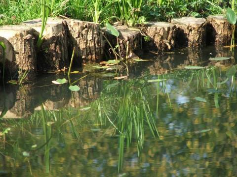 трава отражается в пруду