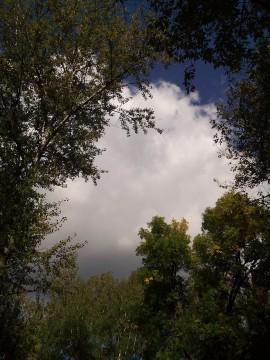 облако и деревья