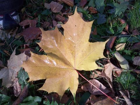 еще не жухлая листва
