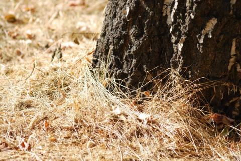 выжженная трава и ствол дерева