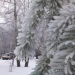 Лед на дереве: зима-2010 в Подмосковье