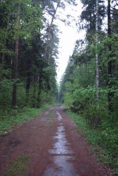 мокрая дорога в подмосковном лесу