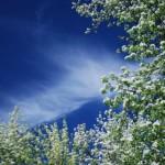 Облако и цветы