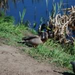 Птицы у реки