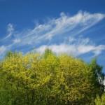 Облако над деревьями