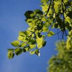 Листья на синем