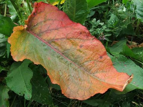 лист в траве