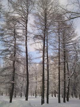 паттерн зимы