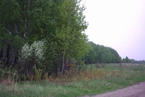 проселочная дорога на опушке леса