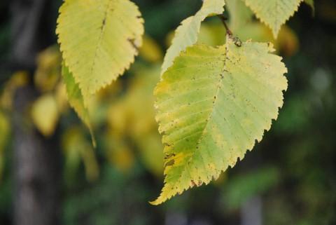 зеленый лист фото