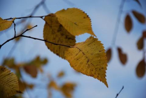 жухлый лист фото