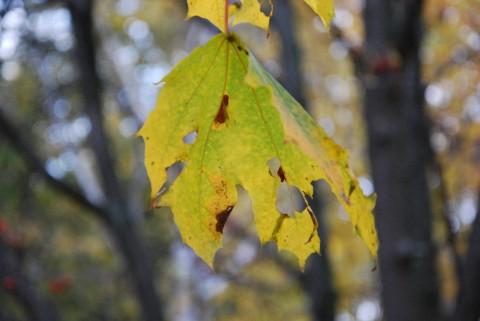 увядающие листья фото