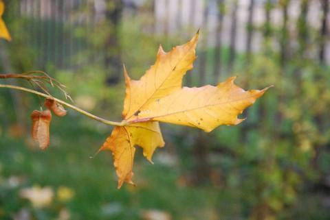 желтый лист на зеленом фоне