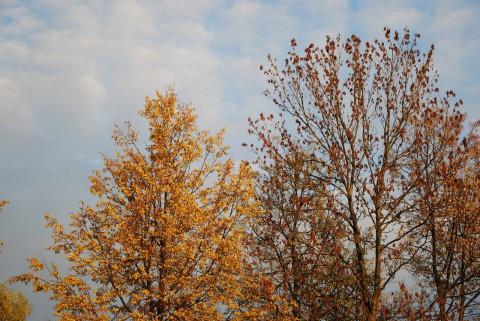 осенние деревья фото