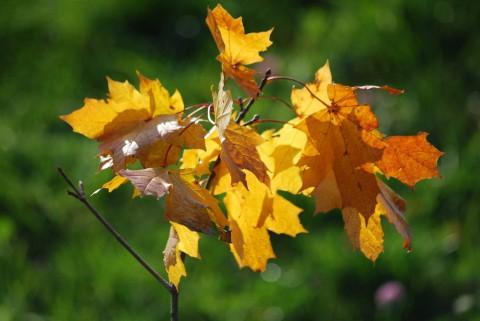 листья на свету