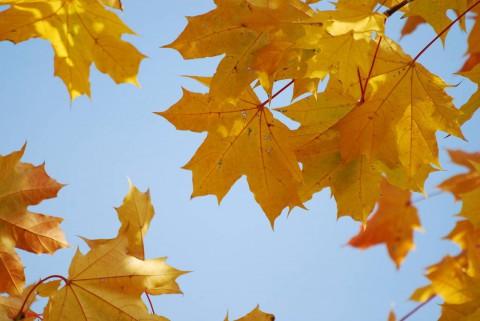 листья желтые над городом