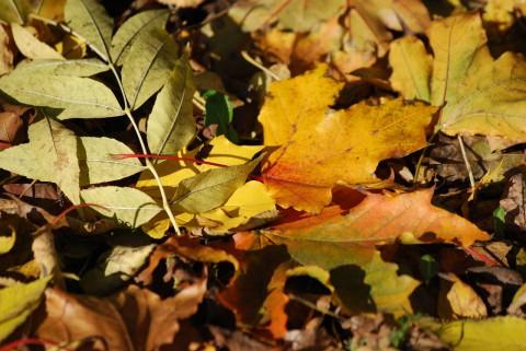 ворох листьев