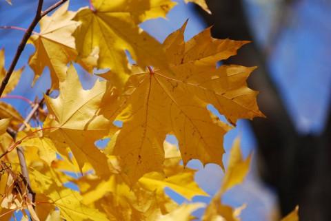 листья и ветки