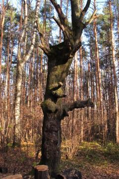 лесной монстр фото