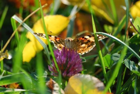 фото бабочки на цветке
