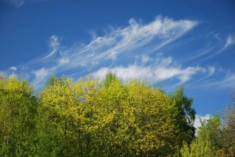 облако над деревьями фото