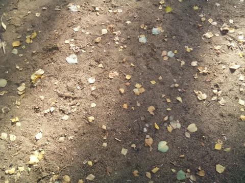 листья и тени