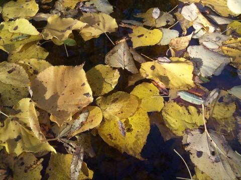 листья вповалку