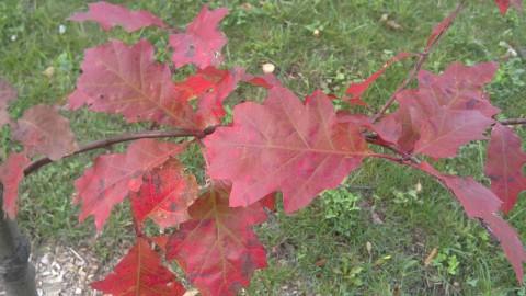 красные листья фото