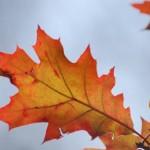 Красный лист