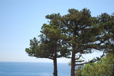 деревья и море
