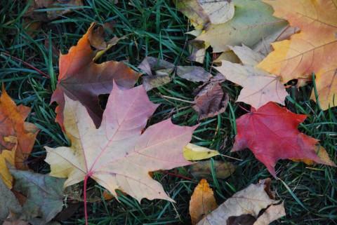 фотография осенних палых листьев