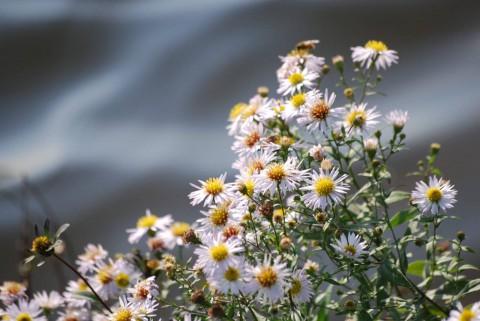 цветы у речки