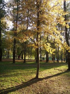 дерево и диагональные тени