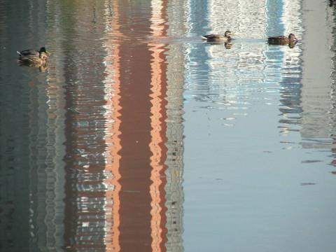 утки на вечерней воде