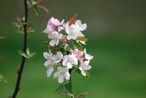 обои фото цветов