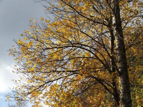 золотая осень-2: октябрь 2006